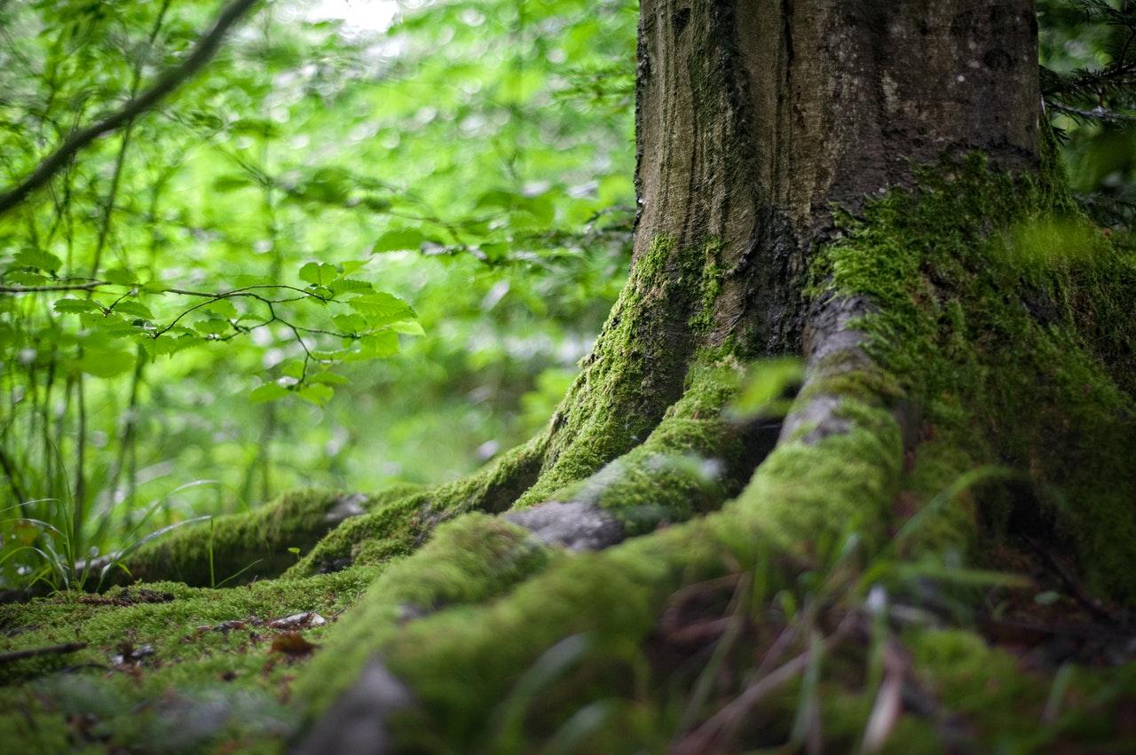 Czy urzędnicy bronią przyrody?