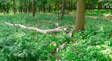 Miasto zniszczyło las